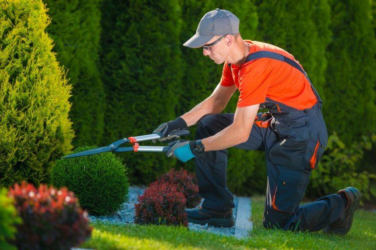 Meseria de grădinar: salariu, responsabilități și aptitudini necesare
