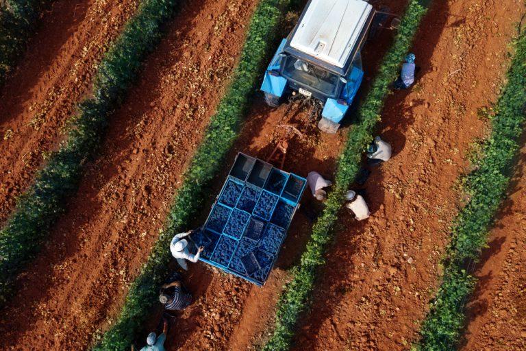 Lucrătorul agricol: unde poți lucra și de ce trebuie să ții cont
