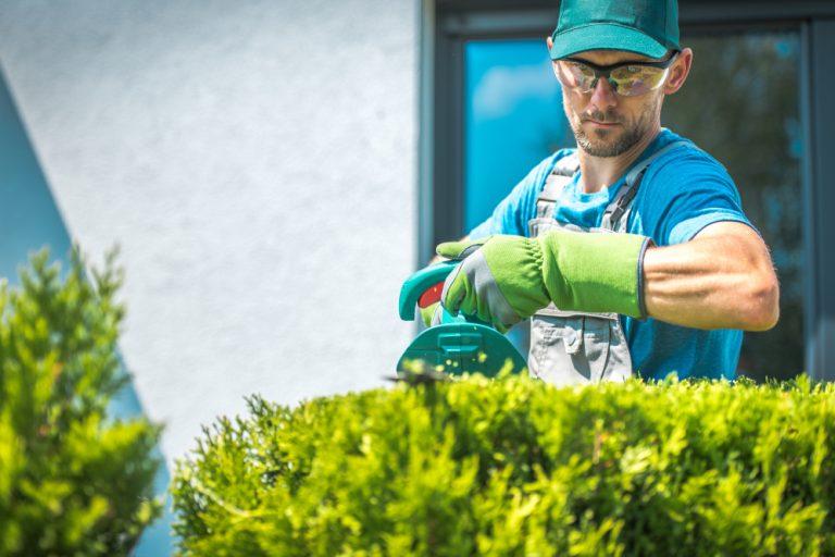 Ce te așteaptă la un job de grădinar – avantaje, dezavantaje și detalii mai puțin cunoscute