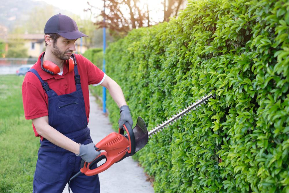 Avantajele meseriei de gradinar